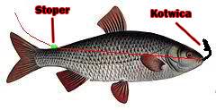 Zestaw z martwą rybką
